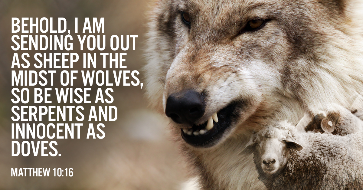Image result for sheep in the midst of wolves